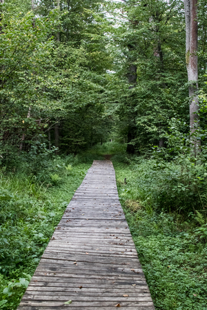 wooden footbridge in the green forest. Wooden planks to create a path for hiking and trekking in a forest, green trees on the sides and green grass in the ground, perspective view. 免版税图像