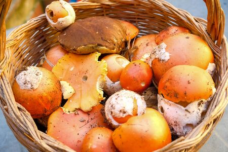 Autumn wild mushrooms composition. boletus edulis fungi,seasonal ingredients