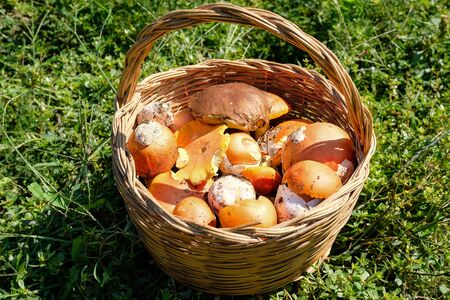 Seasonal raw mushrooms composition in basket, autumn natural food ingredients