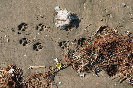 Animal footprints on plastic polluted sandy beach contaminated ecosystem, italy