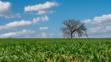 Solitary tree in the countryside around the town of Montefalco in Umbria (Italy). 版權商用圖片