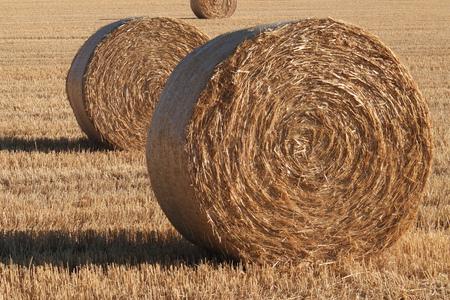 Balles de foin dans un champ de culture. Format paysage.