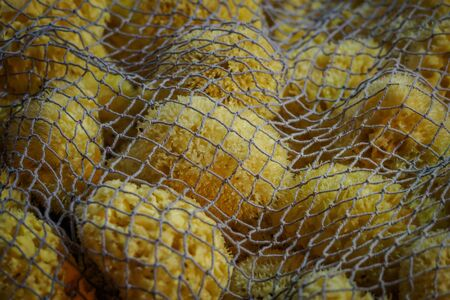 Bunch of yellow natural sea sponges covered with a net. Landscape format.