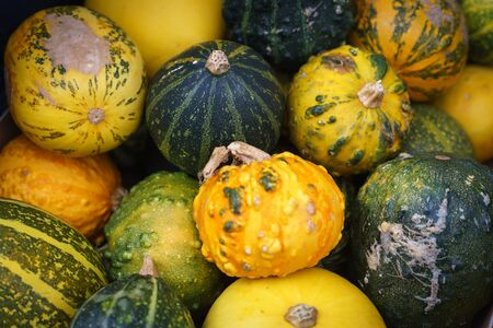 Ornamental yellow, orange and green pumpkins. Landscape format.