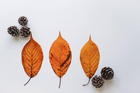 Landscape format banner with pine cones and orange leaves on a white background. WinterChristmas concept.
