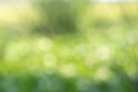 Bokeh is an effect that comes from the light in the name of green grass, green abstract background. Archivio Fotografico