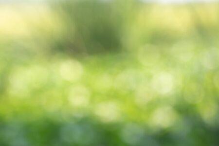 Bokeh ist ein Effekt, der vom Licht im Namen von grünem Gras, grünem abstraktem Hintergrund kommt. Standard-Bild