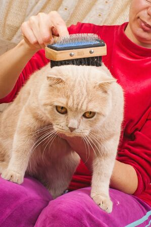 cat grooming: Grooming brush for cutting plica of cat matted