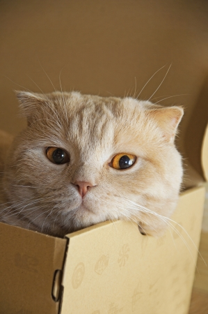 Head of a cat looking out of a box