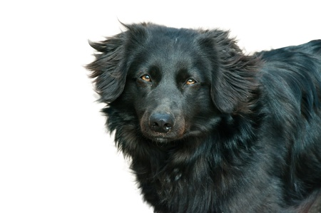 dog lonely lovely face doggy front view photo