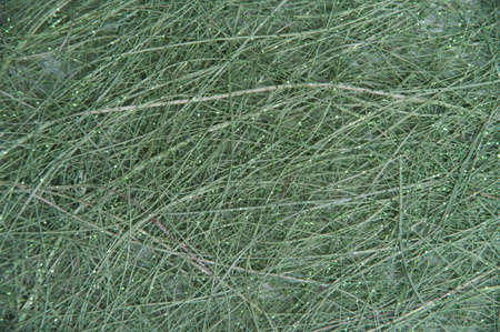 fibres: Texture grey canvas from the long fibres Stock Photo