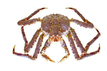 big King  crab on a white background Zdjęcie Seryjne