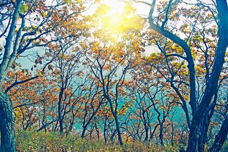 outumn: clorful foliage tree and japan sea  at outumn Stock Photo