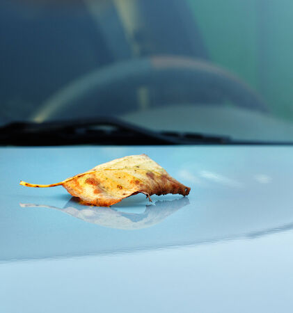 Autumn maple leaf on hood of a car on a background of steering its time to prepare for winter photo