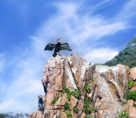 Cormorant sitting on a rock with wings spread wide to dry