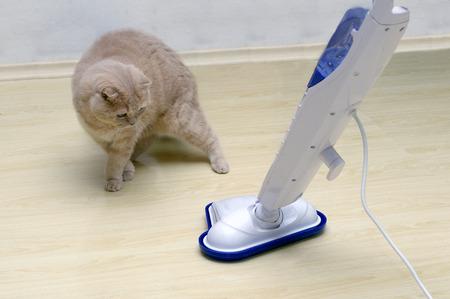 Staubsauger auf dem Boden mit einer überraschten Katze