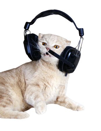 Singing cat or kitten in headphones listening to music isolated