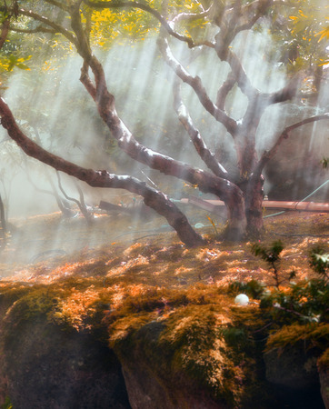 Sun beams thorough trees and greens in fog