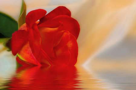 Red rose on dreamily lit white fabric with watery foreground