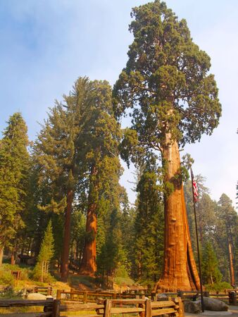 The Sentinel, a giant sequoia in Sequoia National Park Foto de archivo