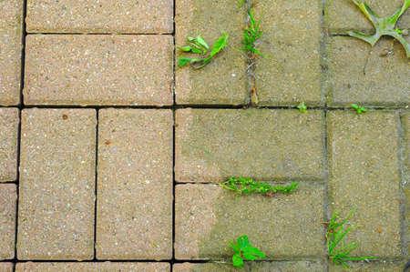 Contraste saisissant entre la puissance à la chaux et des briques vierges sur un patio Banque d'images - 3179854