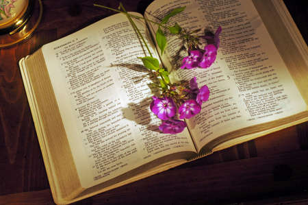 Open Bible on wooden desk with phlox stems and lamp base 版權商用圖片