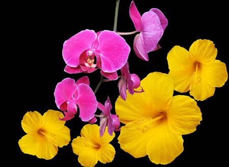 Montage of beautiful orchids and hibiscus on black Imagens
