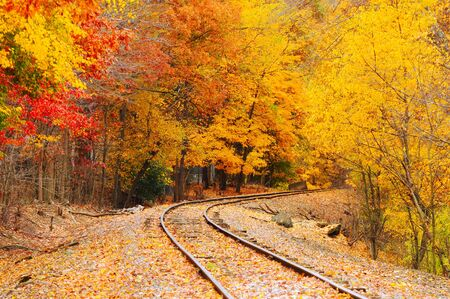 An old railroad track (still in use) runs through a brilliantly colored autumn woods