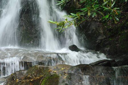 Portion of Laurel Falls in Great Smoky Mountains National Park with rhododendron leaves