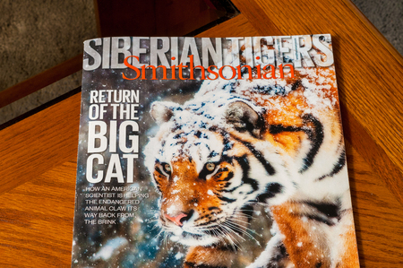 TWINSBURG OH  MARCH 21 2015: The February 2015 issue of Smithsonian Magazine on a coffee table. On the cover is an Amur tiger whose range has shrunk to a small area in far eastern Siberia. 新聞圖片