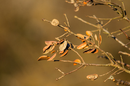 Trees with few leaves and dry about to fall with brown background Stock Photo