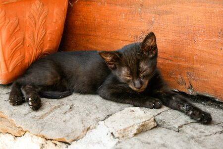 Black kitten (Felis silvestris catus) lying resting and sleeping on top of stone Stock fotó