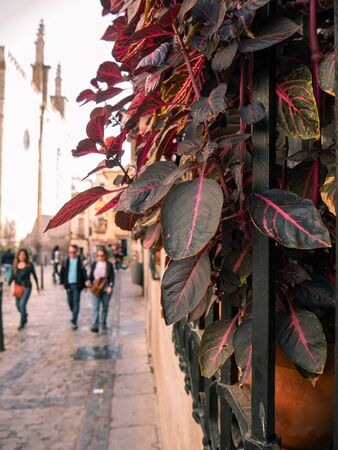 Window with iron fence and long-stemmed plants with pink leaves on a street in Toledo traveled by tourists Stockfoto - 133473975