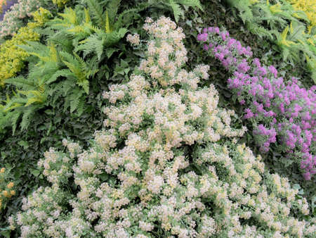 Vertical garden of plastic purple and white plants and flowers forming an artificial background
