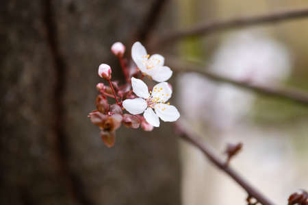 Beautiful blossom in spring close up photograpy