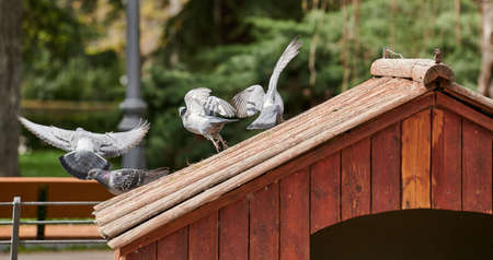 Group of pigeons taking flight from the top of a house in a park pond