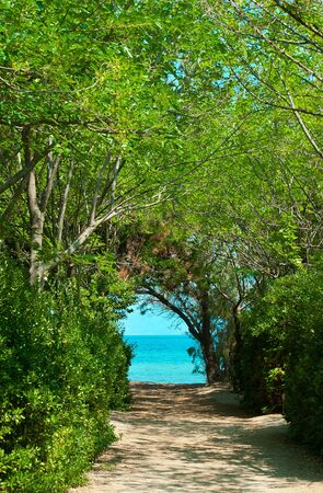 sea grass: pathway in green forest to the beach
