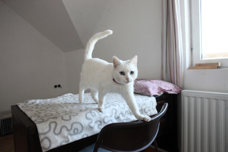 animalitos tiernos: White cat stepping out
