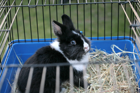 rabbit cage: Blue-eyed bunny in the cage