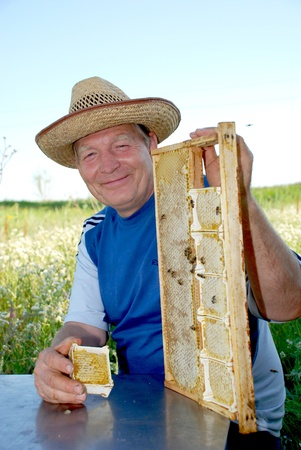 Bee-keeping in the hands of the frame with the bee honeycombs photo