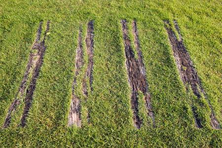 Grass growing along wooden walkway Stock Photo - 8447635