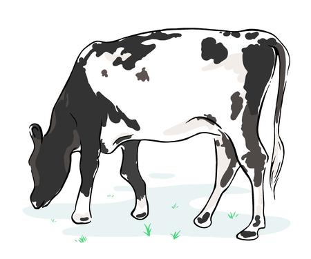 The cow chews a grass on a meadow. Illustration Ilustração