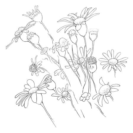 herbal background: Flowers floral background.  linear herbal illustration Illustration