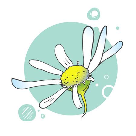 herbal background: Flowers floral background. Herbal illustration