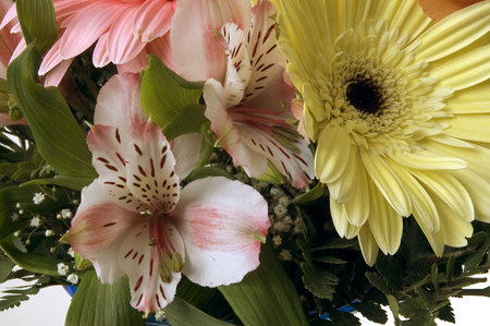 eg: Colorful spring flowers, in various occasions, e.g.: mothers day, international womens day, Valentines day, birthday, remembrance day, teachers day, graudation ceremony, visit.