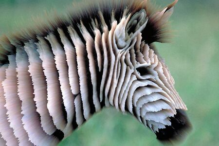computerized: Zebra. Photorelief. Three-dimensional computerized photo transformation. Stock Photo