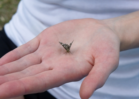 handbreadth: Butterfly on the palm