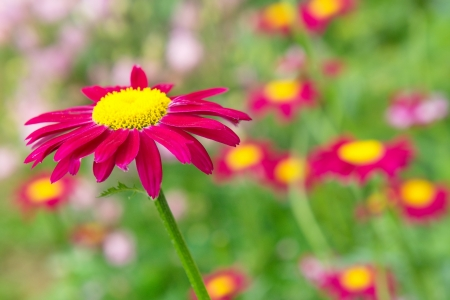 Crimson flower on the natural background. photo