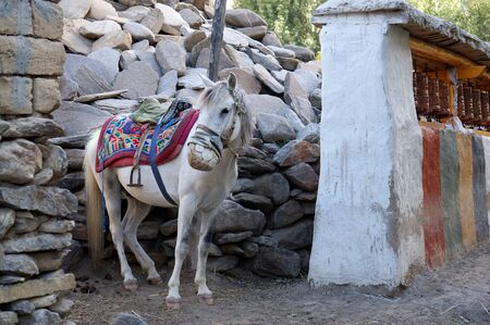 A harnessed riding horse in a leather protective muzzle from mosquito bites, stands in the yard. Upper Mustang. Nepal.