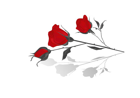 Red rose with shadow. Illustration